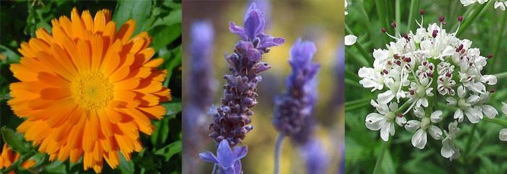 fiori commestibili, minerali ed antiossidanti